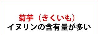 菊芋 ( きくいも・キクイモ )とは